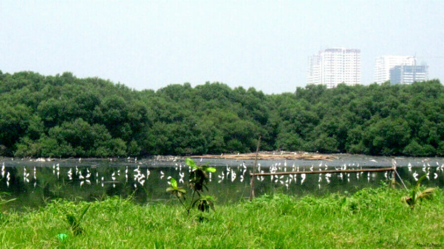 Did you know that there is a 175-hectare ecological zone secretly hidden just at the coastal boarder of Paranaque? image via gmanews.tv