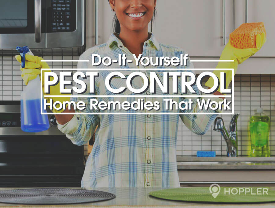 Home pest control january 2017 do it yourself home pest control solutioingenieria Image collections